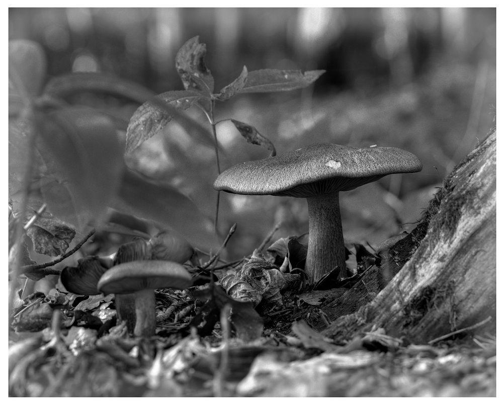 Pilze im Steigerwald