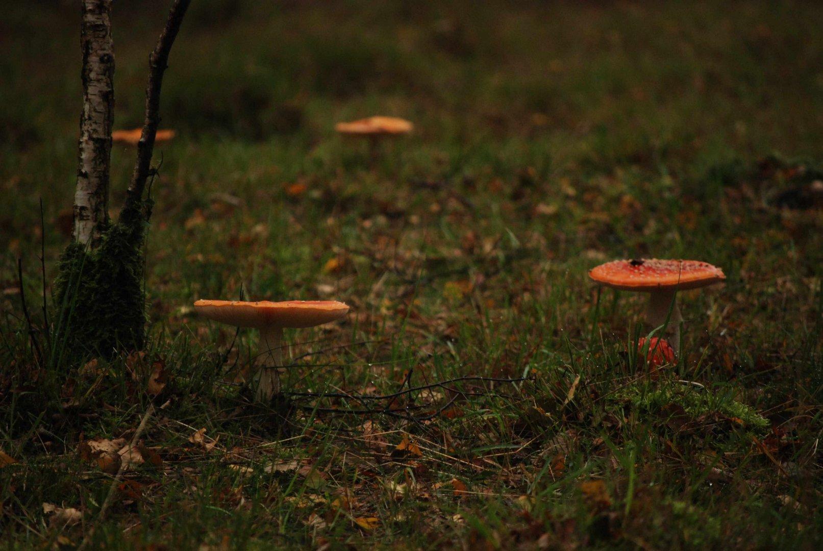 Pilze im Venn