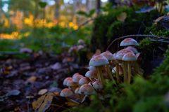 Pilze im Wald , Herbst