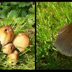 Pilze in meinem Garten