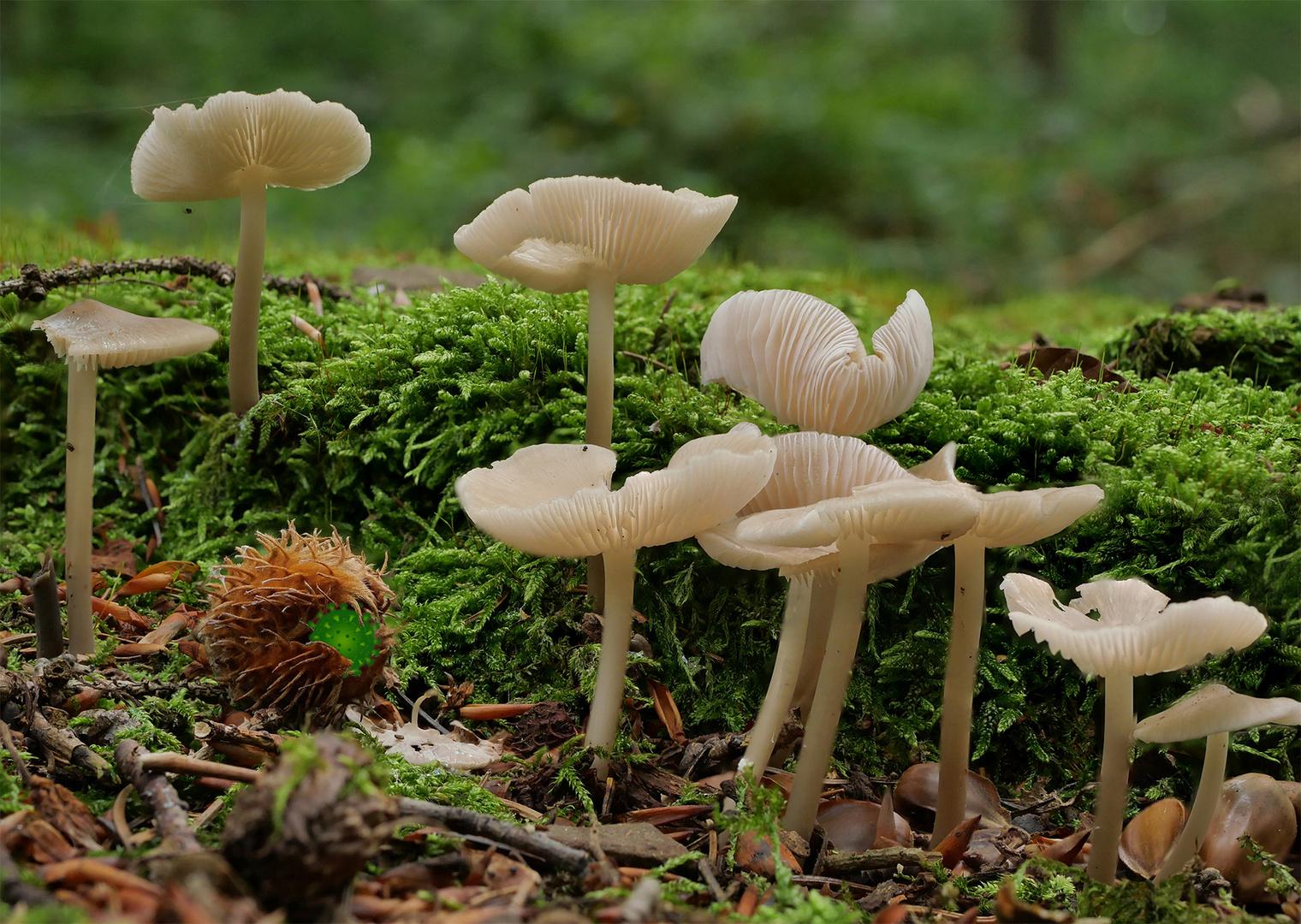 Pilze können keinen Abstand halten, und das Virus lauert überall