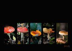Pilze  (lat. Fungi)