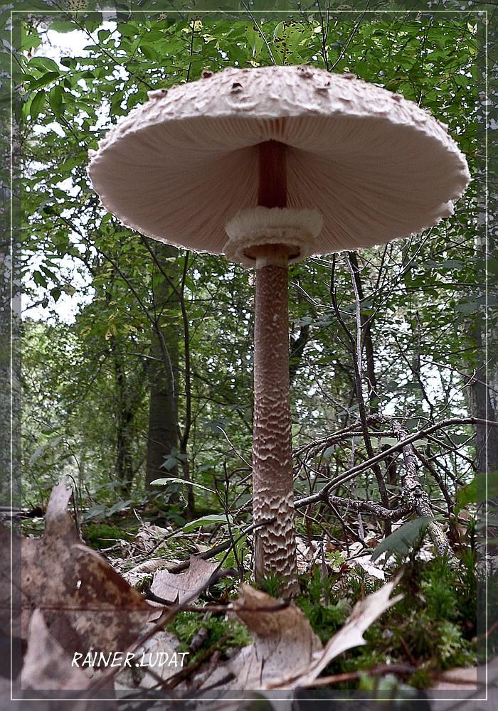 pilze lat fungi sind eukaryotische lebewesen foto bild pflanzen pilze flechten pilze. Black Bedroom Furniture Sets. Home Design Ideas