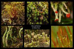 Pilze und Flechten Collage