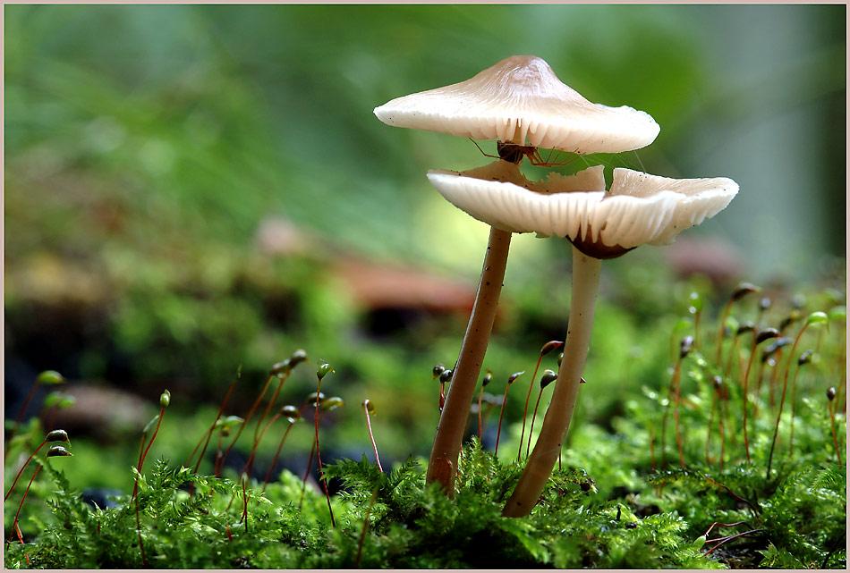 Pilze und ihre Bewohner