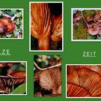 Pilze - Zeit