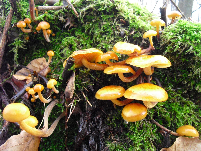 Pilze,so leuchtend und schön