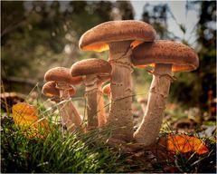 Pilzfamilie im Gegenlicht