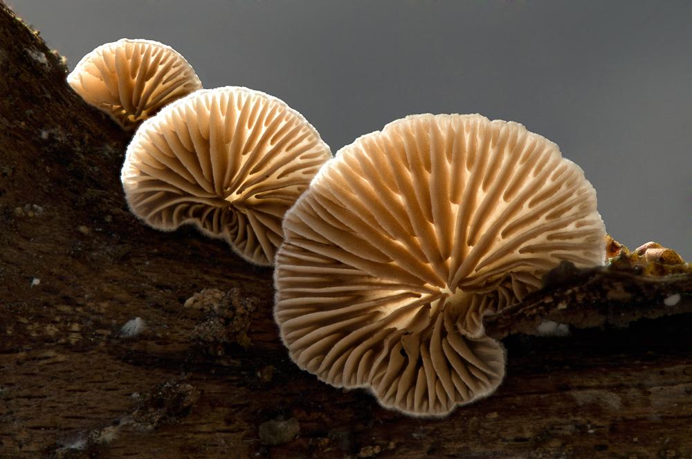 Pilzfamilie im Gegenlicht Reloded