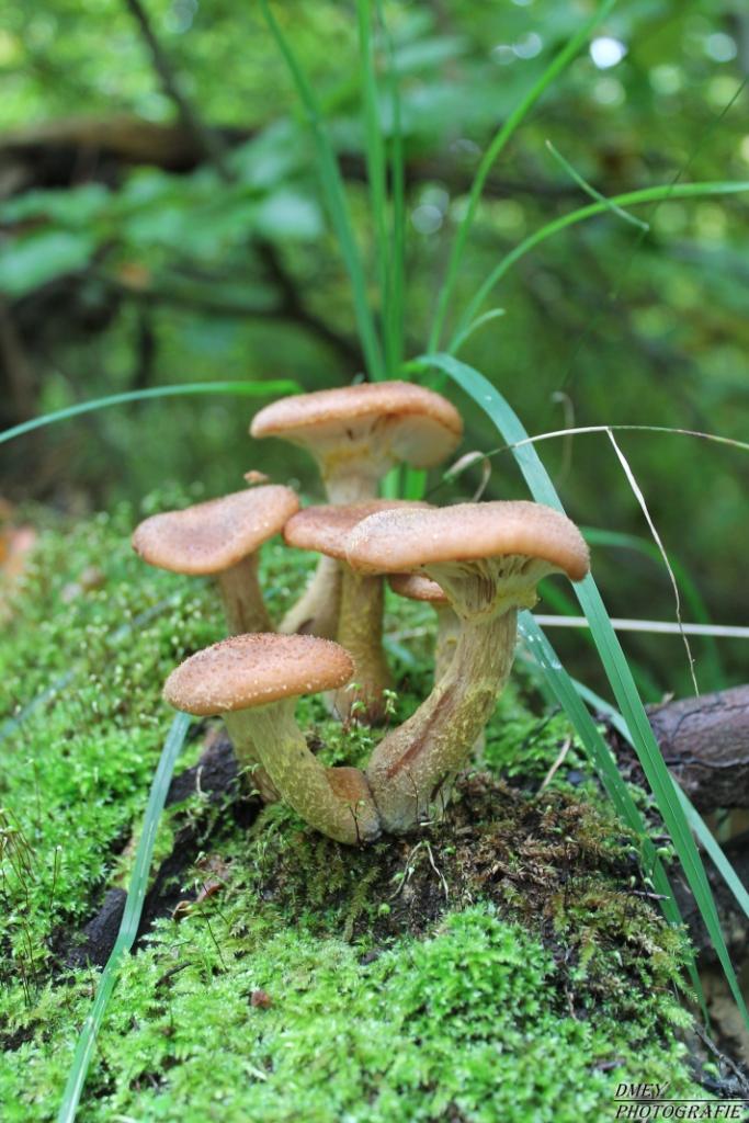 Pilzfamilie im Moosbett