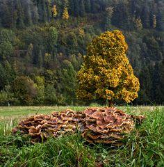 Pilzfamilie mit Linde
