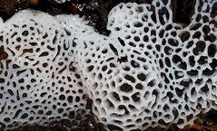 Pilzformationen im tiefen Wald, Foto 2 (Doku).