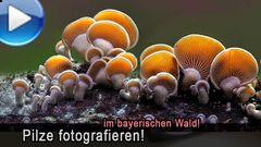 Pilzfotografie im bayerischen Nationalpark