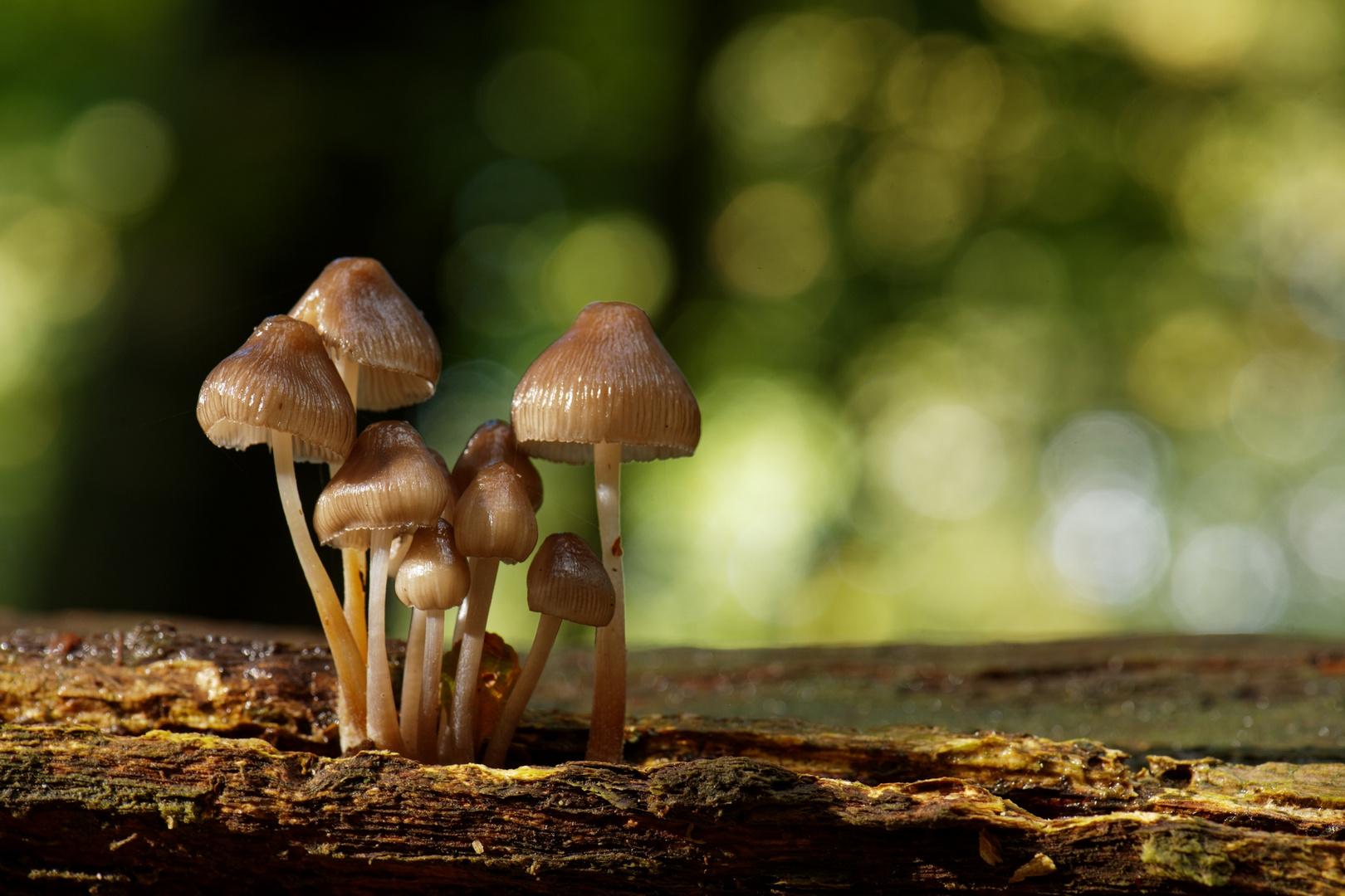 Pilzgruppe auf altem Baumstamm...