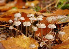 Pilzgruppe im Eifelwald