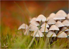 Pilzgruppe im Herbstkleid