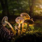 Pilzgruppe im Wald von der Sonne beleuchtet