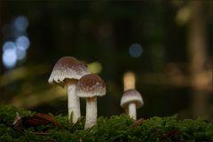 Pilzlertreffen im Bayerischen Wald