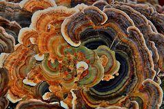 Pilzstrukturen