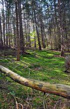 Pilzwald