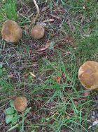 Pilzzeit auf den Friedhof