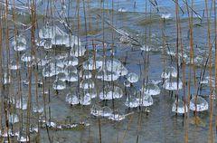 Pilzzeit im See