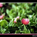 Pinceladas en rosa