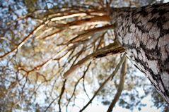 pine time