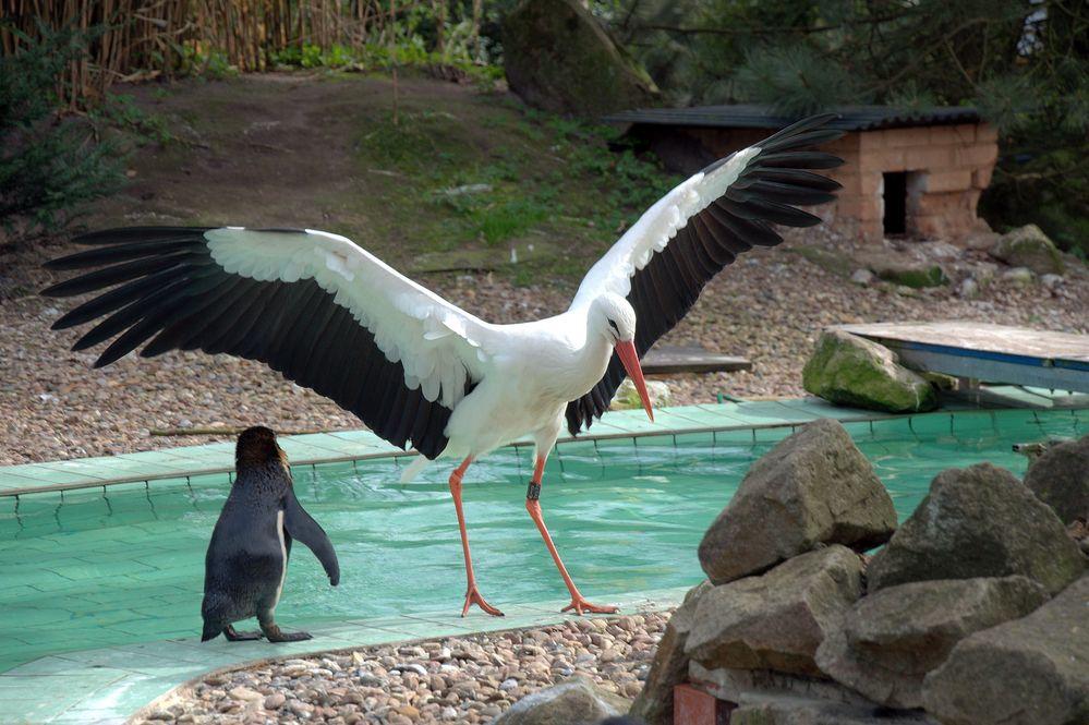 Pingu wir können uns nicht mehr treffen ,meine Frau ist aus Afrika zurück