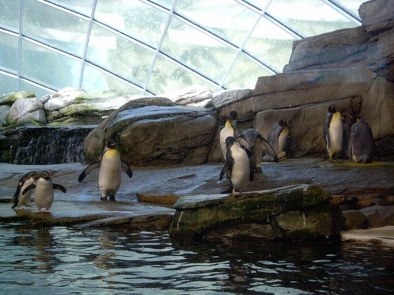 Pinguin Attacke