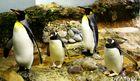 Pinguin-Family