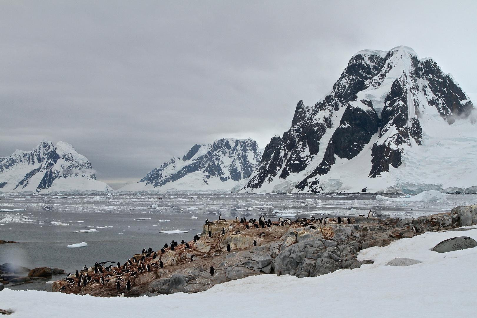 Pinguin-Felskolonie