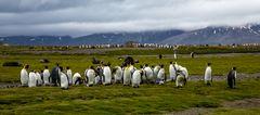 Pinguin-Reihen