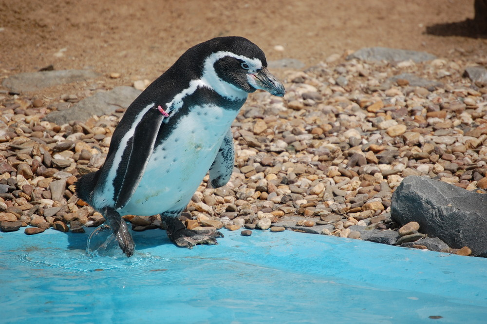 Pinguin Zoo