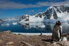 Pinguine auf der Antarktischen-Halbinsel