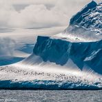 Pinguine auf vorbeiziehendem Eisberg