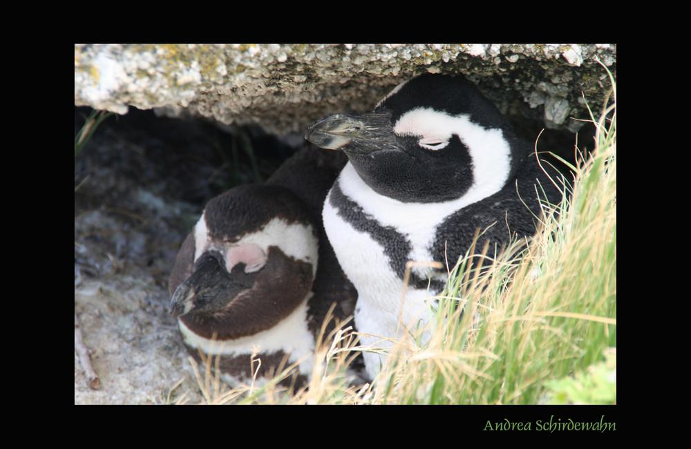 Pinguine beim Dösen