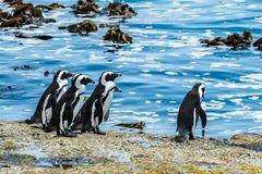 Pinguine Burgers Walk