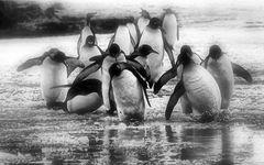 pinguine ....