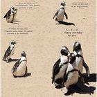 Pinguine gratulieren.....