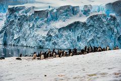 Pinguine im Dorf   .DSC_6911-2