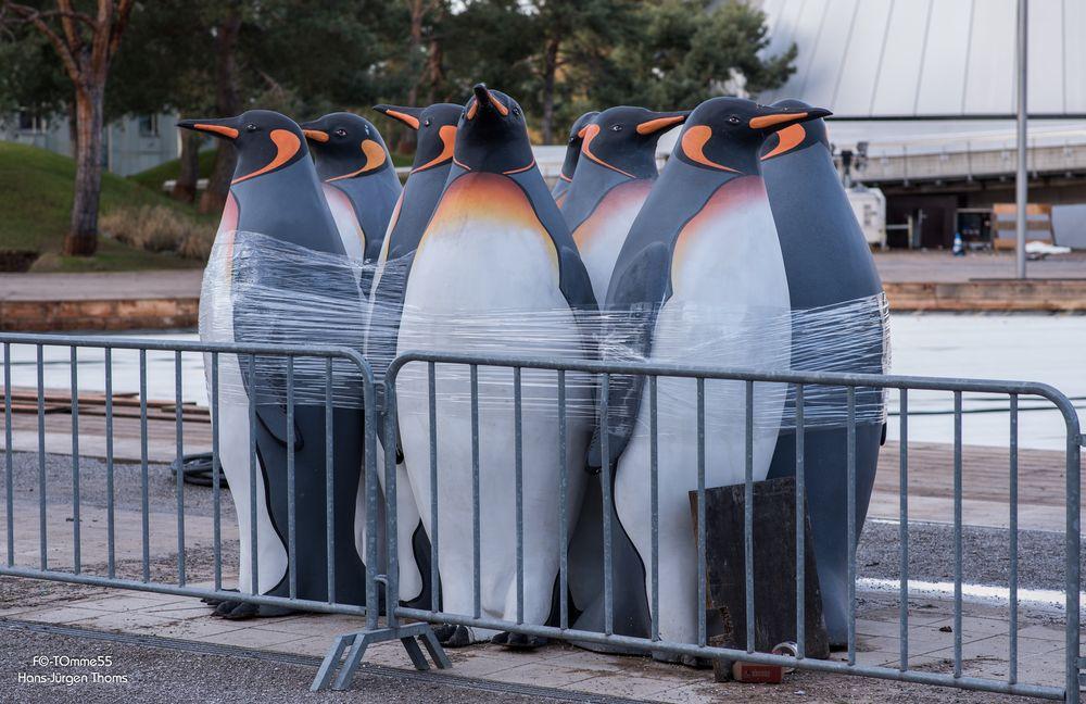 Pinguine in Gefangenschaft