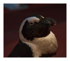Pinguine Promenade