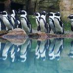 Pinguinparade