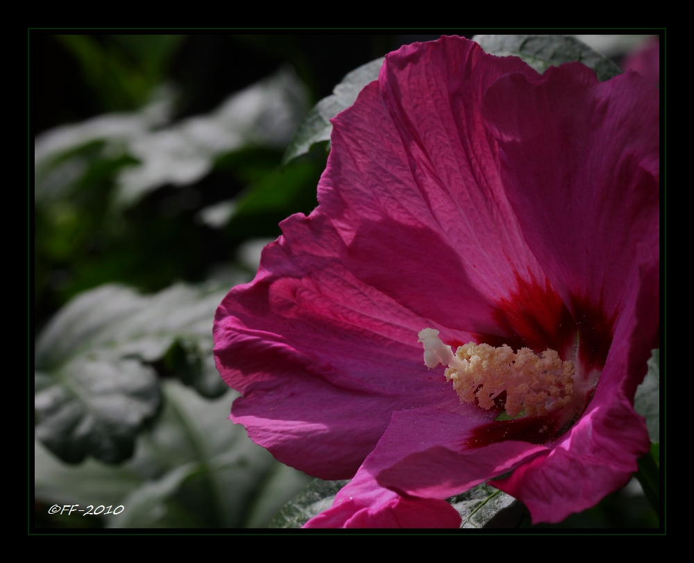 ... Pink ...