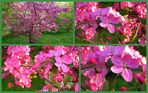 Pink en détail