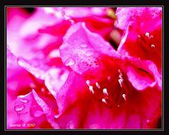Pink Fire....