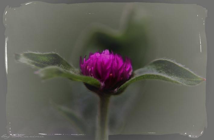 Pink Flower*