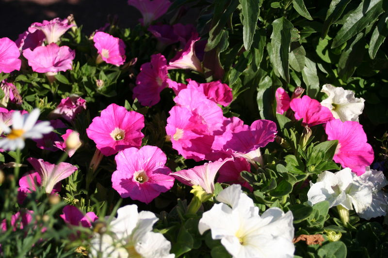Pink flowers...