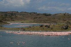 Pink Lake Wonder ~2~